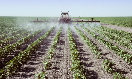 The Right to Healthy Food: Poisoned with Pesticides