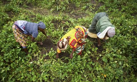 Gates Foundation is Also Destroying Africa's Food Economy