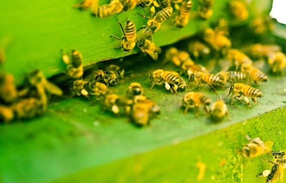 "Study warns US farmland is now 48 TIMES more TOXIC to insects: Are neonicotinoids to blame for the impending ""insect apocalypse?"""