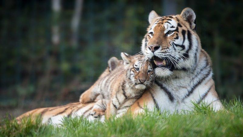 Dublin Zoo warns of permanent closure due to Covid-19 impact