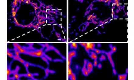 The novel coronavirus' spike protein plays additional key role in illness