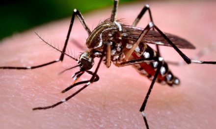 Why Are Gates and Pentagon Releasing GMO Mosquitoes in Florida Keys?